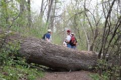 2018-05-09 Coldstream - Downed Tree