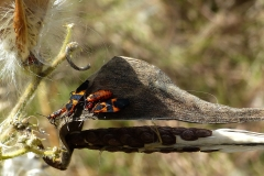 2017InsectContest_gail-mcneil-P1100286FS2