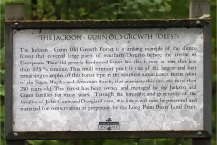 Jackson-Gunn Old Growth Forest
